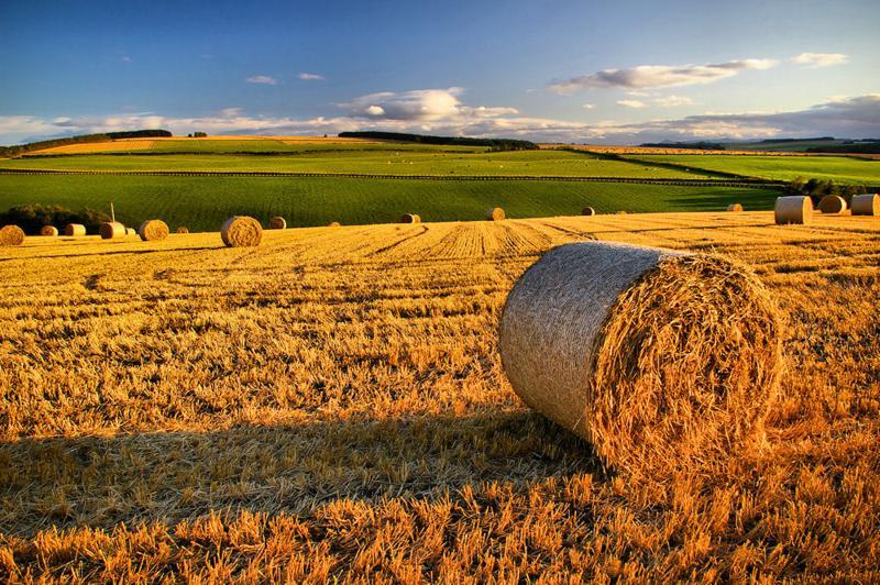 Imu sui terreni agricoli: nel lecchese 51 Comuni esenti - ResegoneOnline
