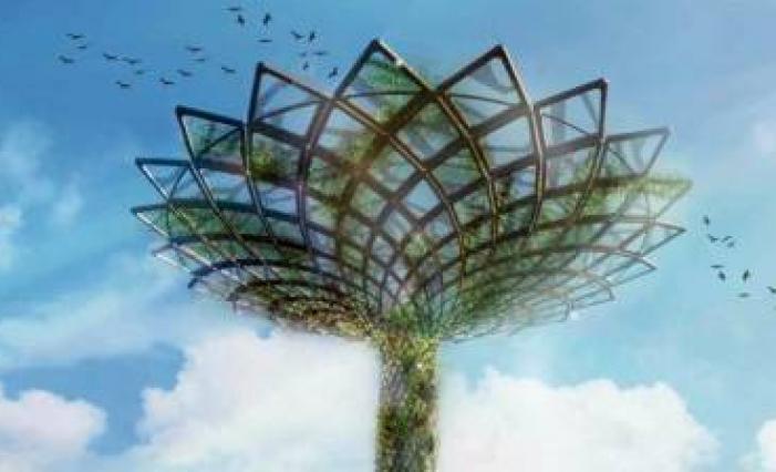 Resegone online notizie da lecco e provincia la chioma for Chioma albero